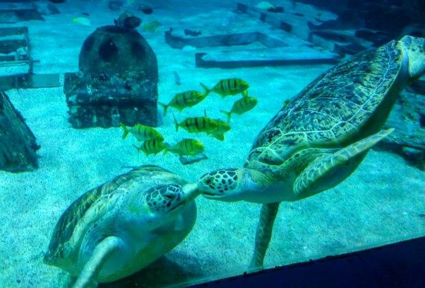 Photo via Camden Adventure Aquarium
