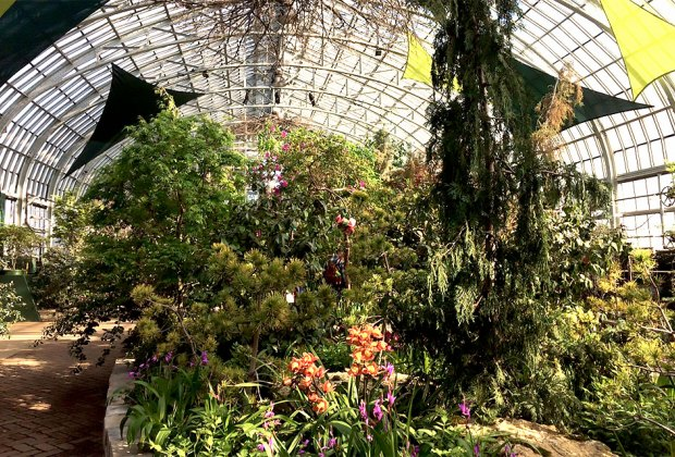 Explore the Spring Flower Show: Understory: Layers of Light and get to know the plants that thrive below the forest canopy. Photo courtesy of the Garfield Conservatory