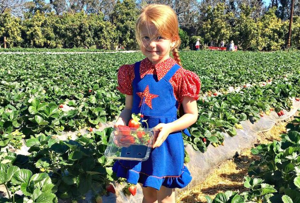 Pick Your Own Strawberries in LA: Underwood Farms
