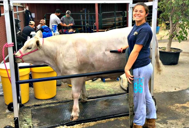 Junior Livestock Auction at the Ventura County Fair. Photo courtesy of the Fair