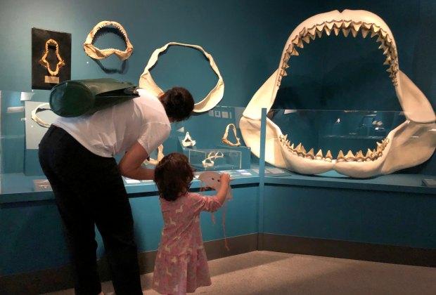 Sharks! Photo courtesy of Bruce Museum