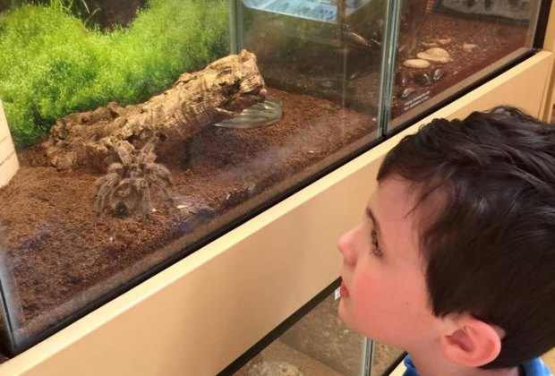 My son was in awe of the spiders!