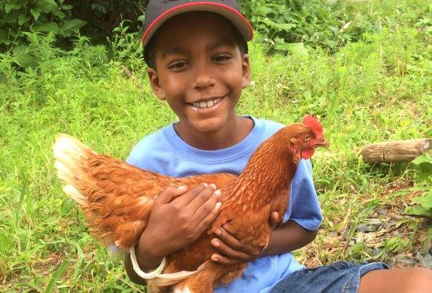 Making new friends at Waltham Fields Community Farm. Photo courtesy of the farm