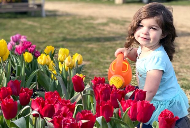 Girl watering tulips at Waterdrinker Farm pick-your-own flower farm.