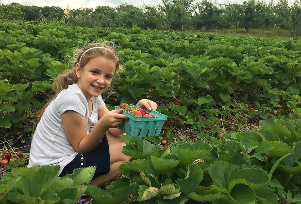 Ochs Orchard offers beautiful views and easy strawberry picking. Photo by Alison Reiser