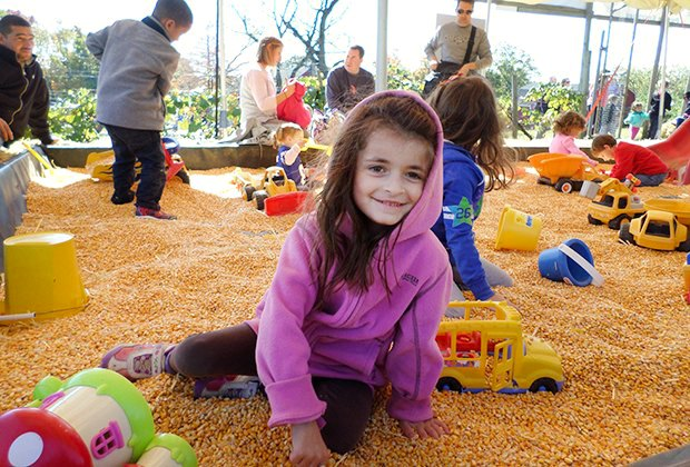 Dig through the corn pit Wightman's Farm this fall. Photo by Laurie Rein