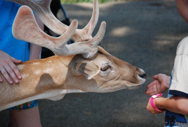Kids and deer can interact closely at York's Wild Kingdom. Photo by Peter Bretton/CC BY 2.0
