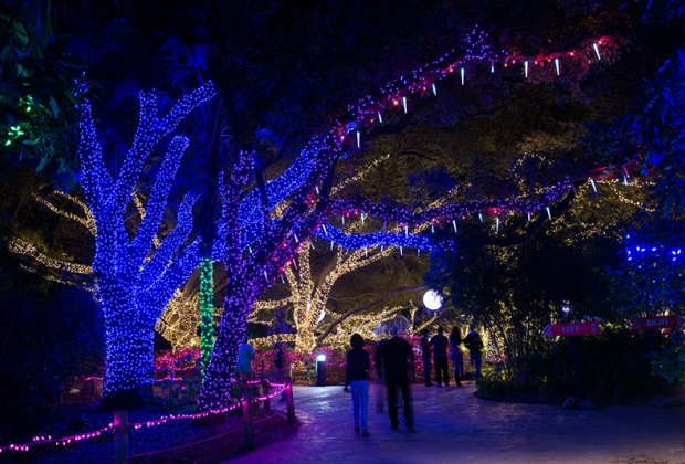 theres something magical about christmas lights that make the holidays come alive even in houston when its 80 degrees on thanksgiving - How To Check Christmas Lights