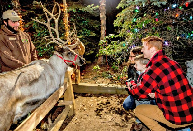 See animals and sparkly lights at the Stone Zoo. Photo courtesy of Zoo New England
