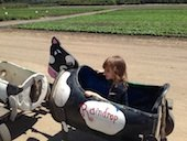 Toddler rides at Underwood Family Farms